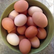 eggsinbowl