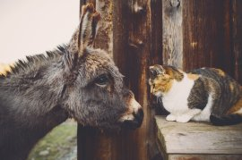 Holly Hill Farm animals; photo by Bluetree PhotographyView More: http://bluetreephotography.pass.us/hollyhill03122013