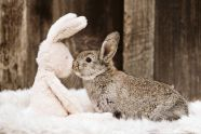 HH_Easter-8634