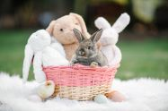 HH_Easter-9920